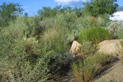 Landscaping_at_Oro_Valley_Marketplace_Kendall_Kroesen