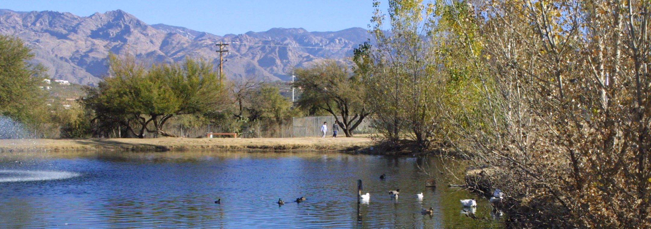 body central tucson swan