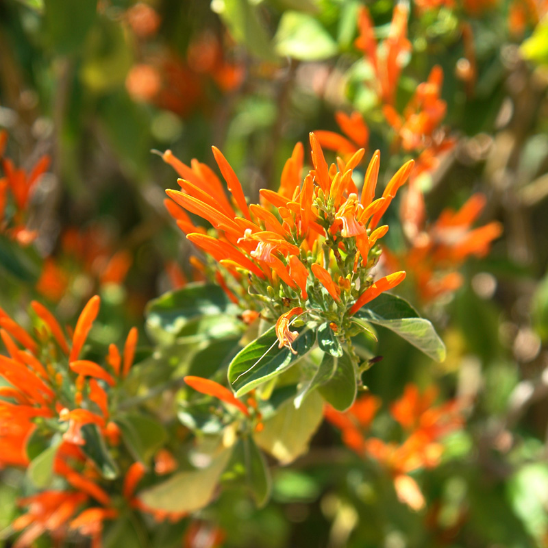 Year Of The Hummingbird Plants For Your Garden Tucson